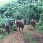 Sur les routes de Bisoro