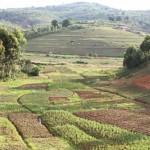 Agriculture sur les collines